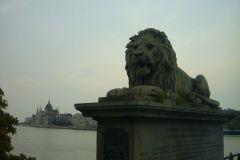 Лев с Цепного моста в Будапеште.