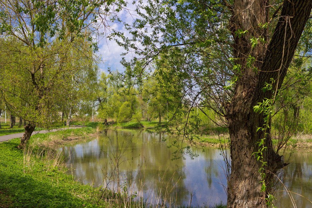 IMG_3276_Баташевский сад.JPG