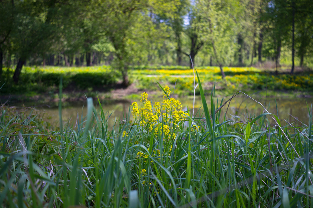 IMG_3379_Баташевский сад.JPG