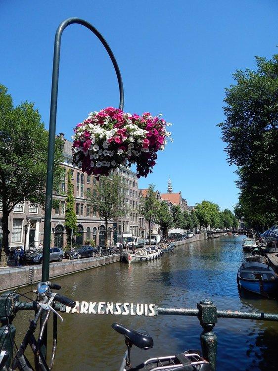 Амстердам( цветы1).jpg