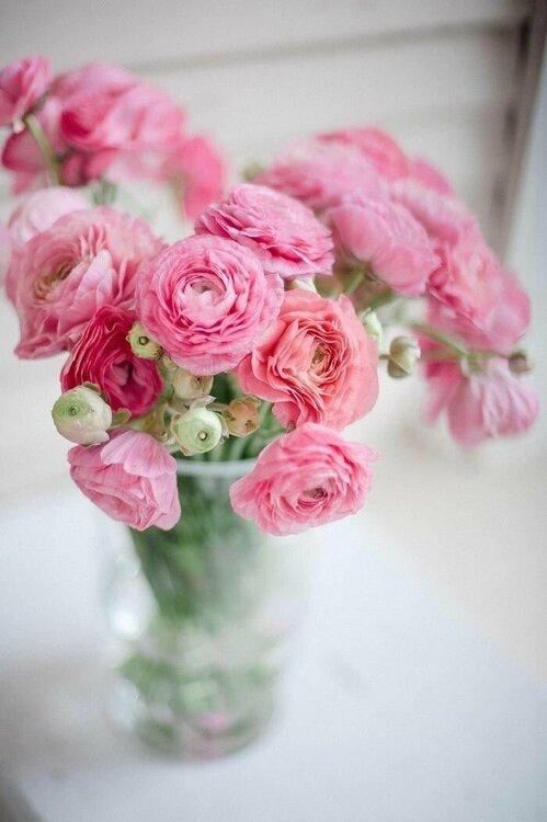 cd2ed1a3b915a07eec1964d29e6ba46d--pink-flowers-pretty-flowers.jpg