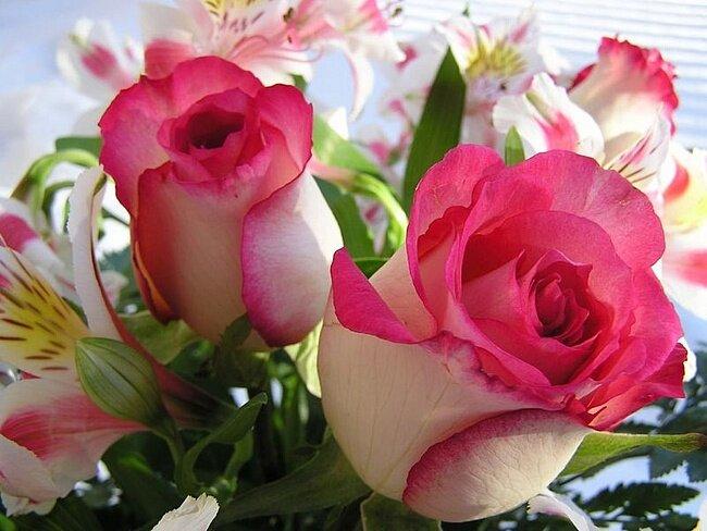 роза3.jpg