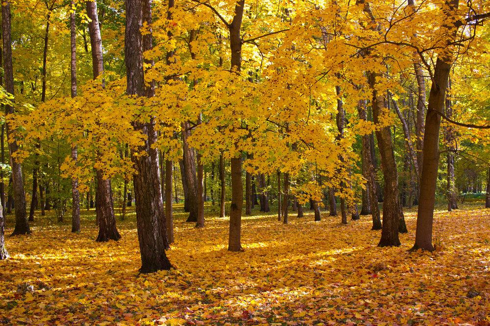 IMG_5117 Белоусовский парк.jpg
