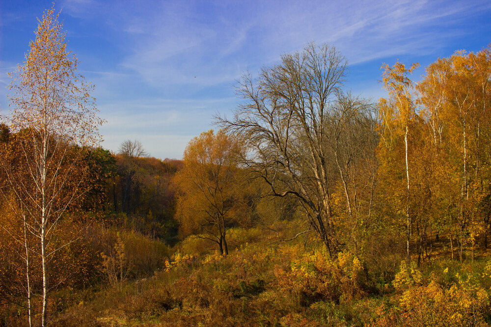 IMG_5456 Белоусовский парк Зрелая осень.jpg