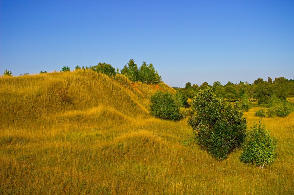 12 IMG_4618 Бежин луг Бархатистые холмы.jpg