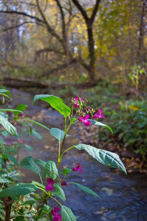 IMG_5365 Рогожинский лес.jpg