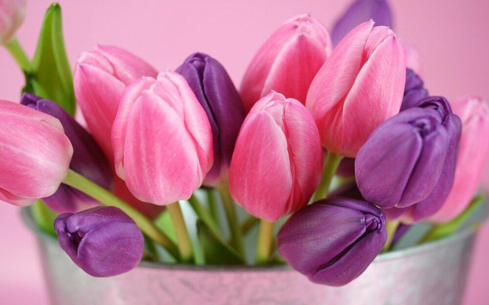 tyulpany-cvety-butony-bd47ae9.jpg