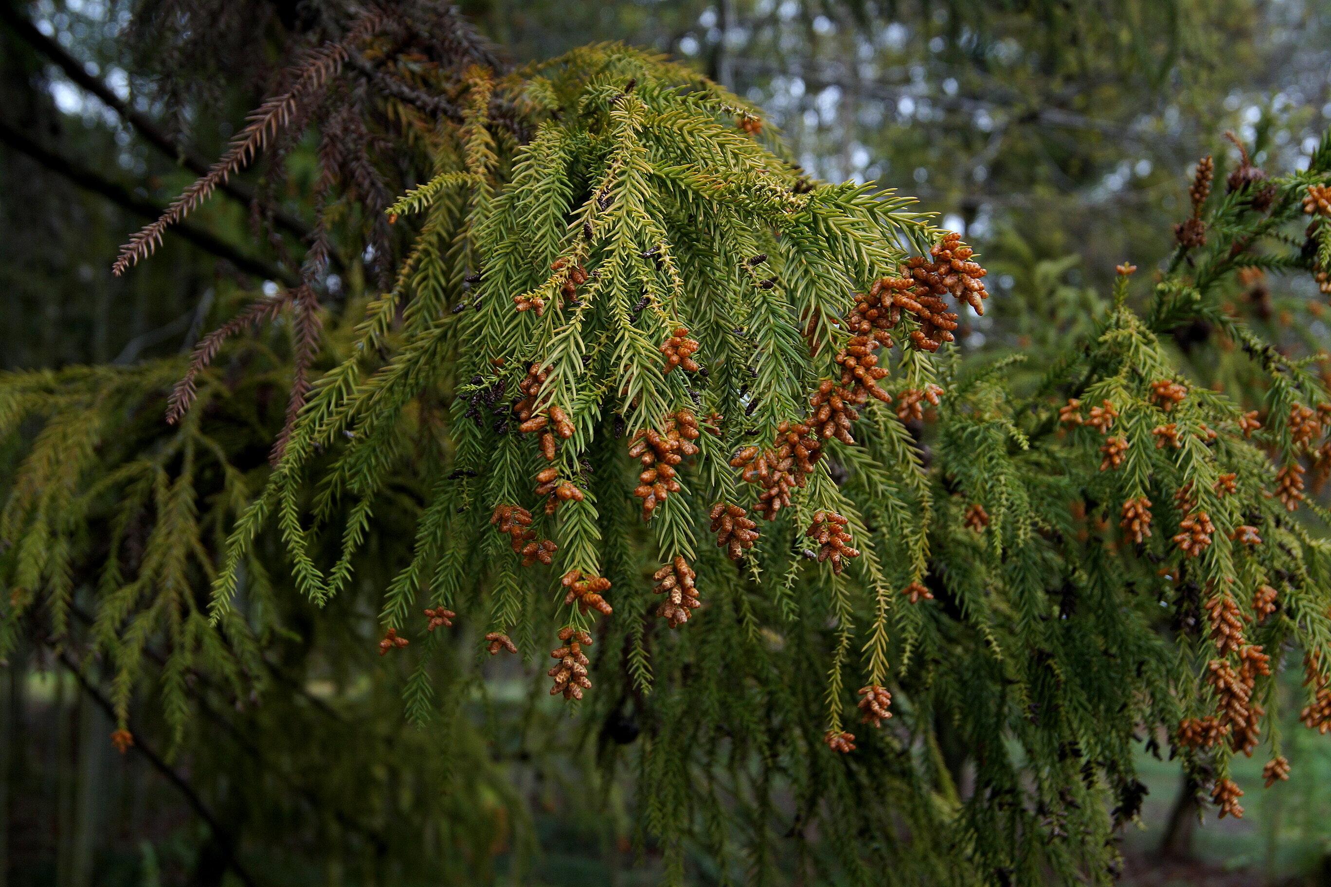 Путевые февральские заметки. Прогулки по Кутаиси. Ботанический сад
