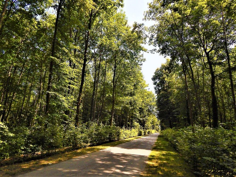 Шантийи(лес).jpg