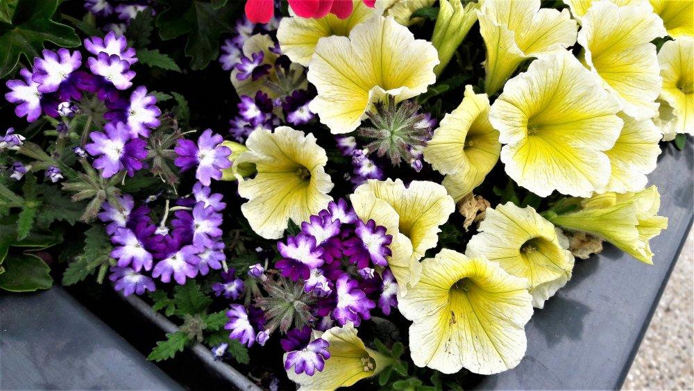 Этрета( цветы).jpg