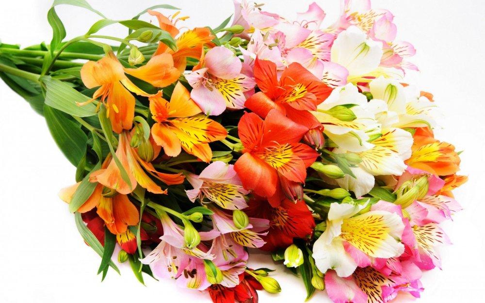 1416297292_cvety-krasivye-cvetok-buket.jpg