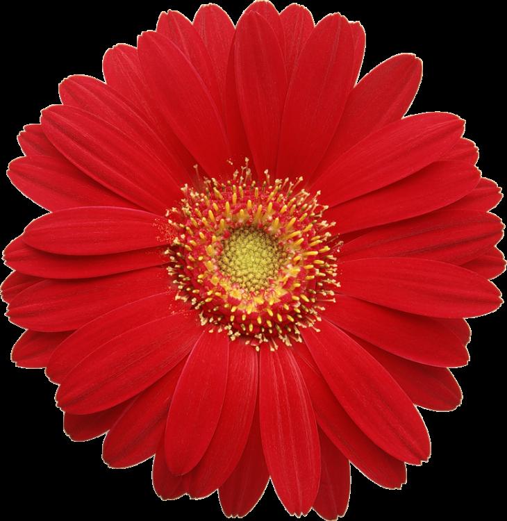 Цветочек.png