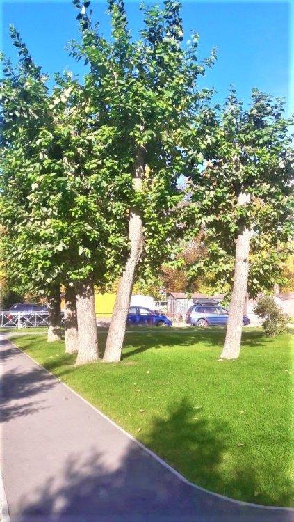 Осень, осень12.jpg