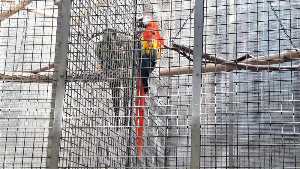Брест попугай.jpg