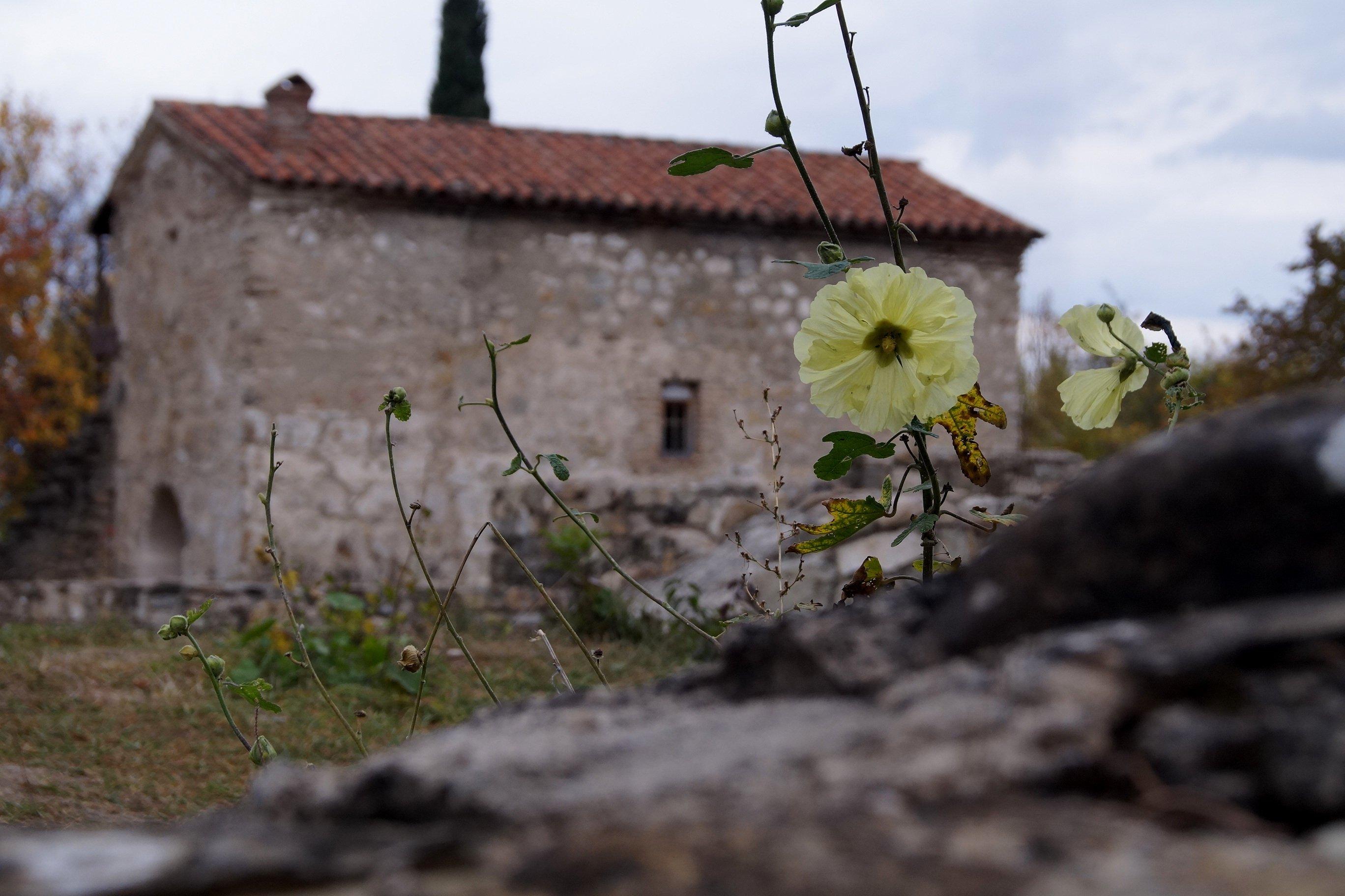 Кахетия. Монастырь Икалто (Заметки из солнечного отпуска, день 12)