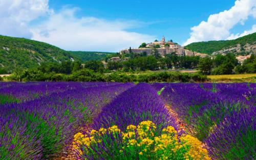 Lavender-Field-In-Provence-France-2560x1600.jpg