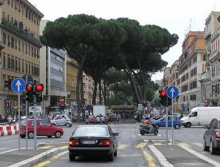 788px-Umbrella.pine.in.rome.arp.jpg