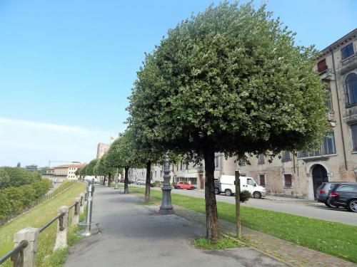 Бульвар в Бассано 1.jpg