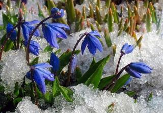 Весна пришла!.jpg