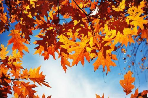 осень .jpg
