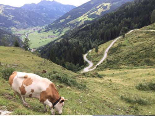 Отпуск с семьей в горах Гаштайна3.jpg