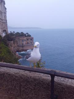 6 Монако (10).jpg