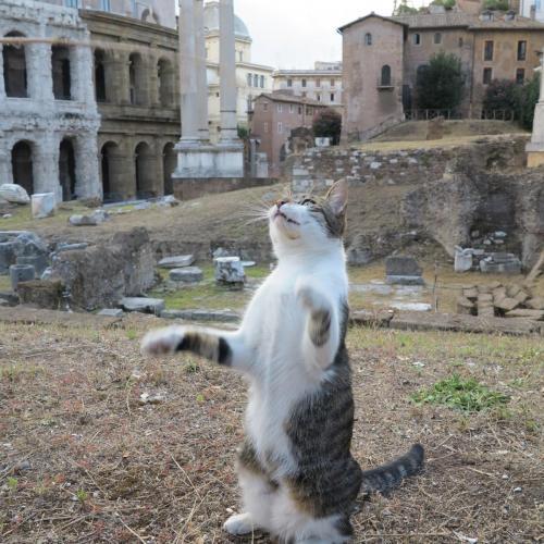 Рим. Кошки пл. Торре Арджентина..jpg