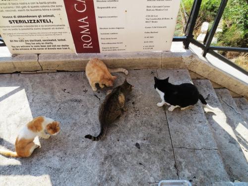 Кошки на пл..jpg