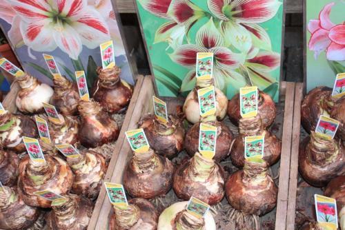 14.05.12_357_Амстердам_Цвет.рынок.JPG
