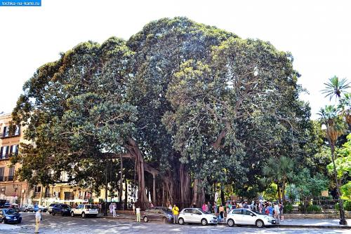 948-Ogromnyj-fikus-v-sadu-Garibaldi-Palermo.jpg