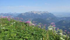 Кельштайн.... Альпийские травы.